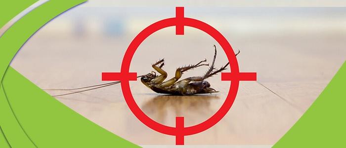 Cockroach Control Magill