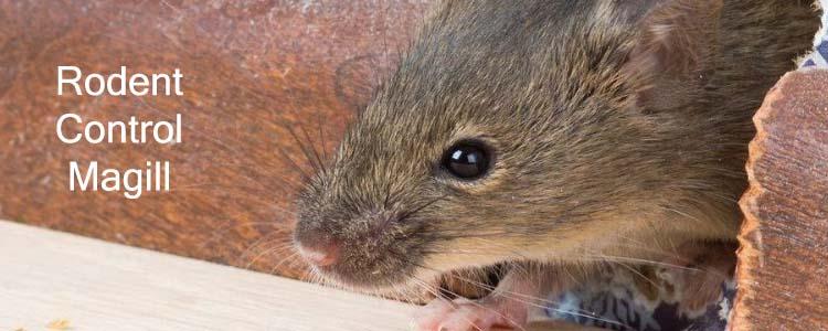 Rodent Control Magill