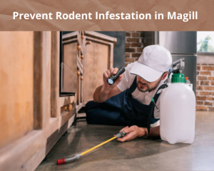 Prevent Rodent Infestation in Magill
